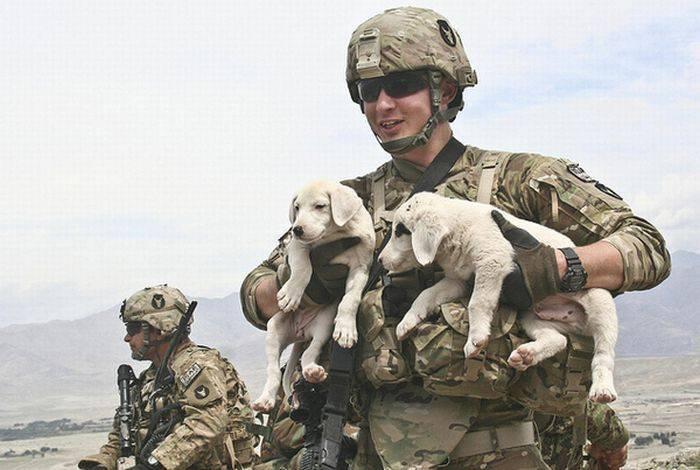 Żołnierze i zwierzaki 19