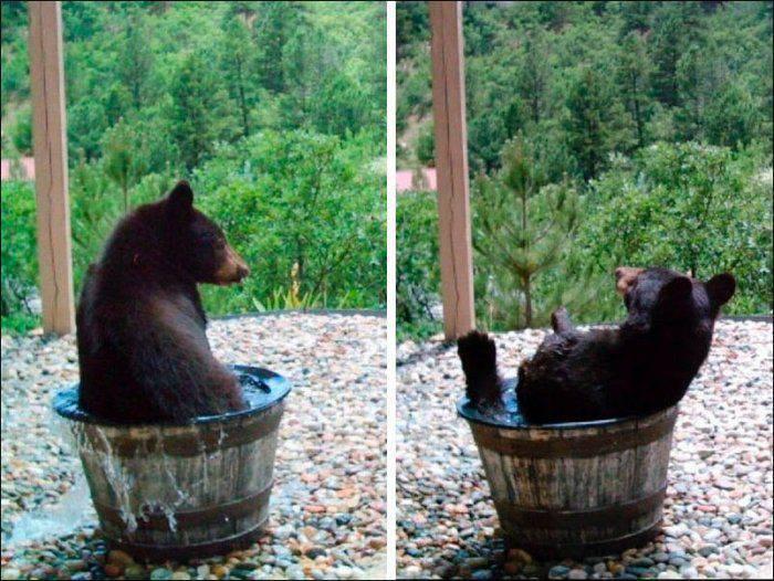 Niedźwiedzie #2 22