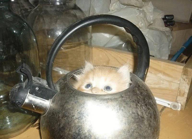 Ulubione zakamarki kotów 8