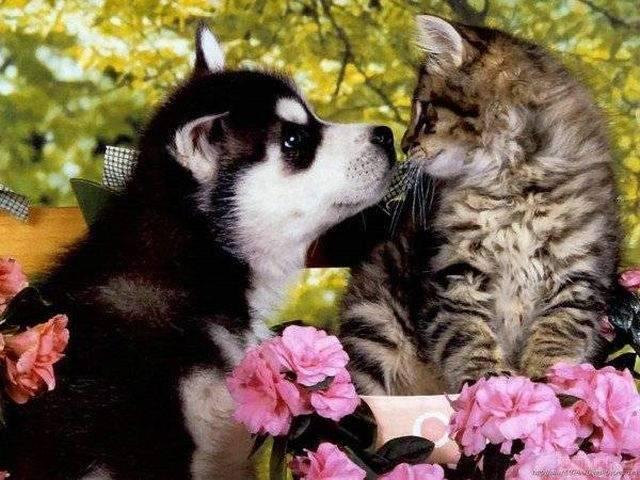Kot i pies w jednym domu ? 53