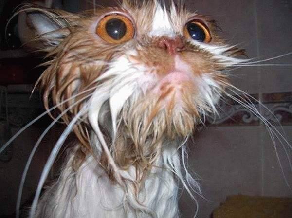 Koty w kąpieli 24
