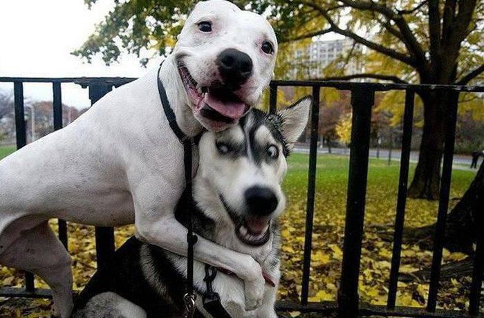 Zabawne zdjęcia psów 11