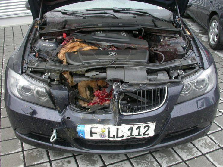 BMW kontra lis 2