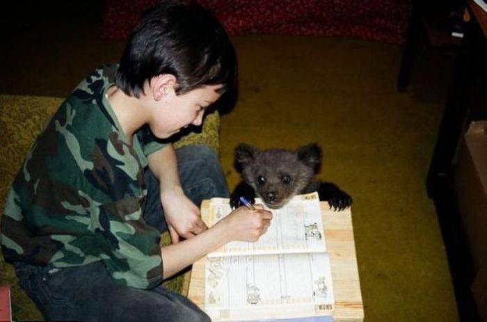 Porzucony niedźwiadek 6