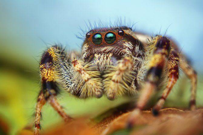 Makrofotografia - owady z bliska 3