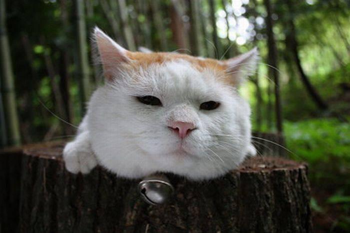 Shironeko - leniwy kot 1