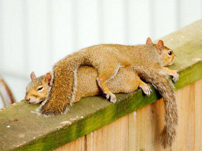Leniwe wiewiórki 1
