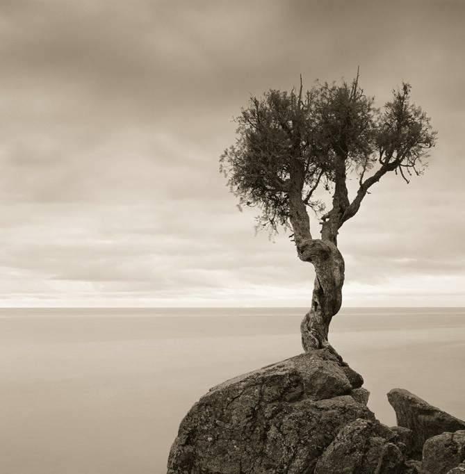 Najdziwniejsze drzewa świata 12