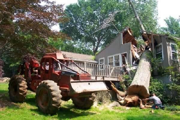 Jak nie należy ścinać drzew 2