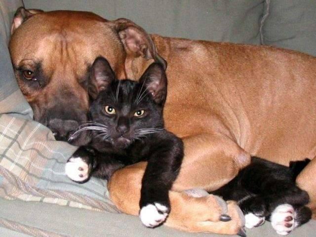 Kot i pies w jednym domu ? 54