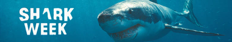 Shark Week 2013 Megalodon The Monster Shark Lives 720p HDTV x264-KILLERS