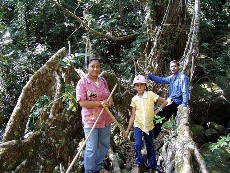 Mosty z korzeni drzew 9