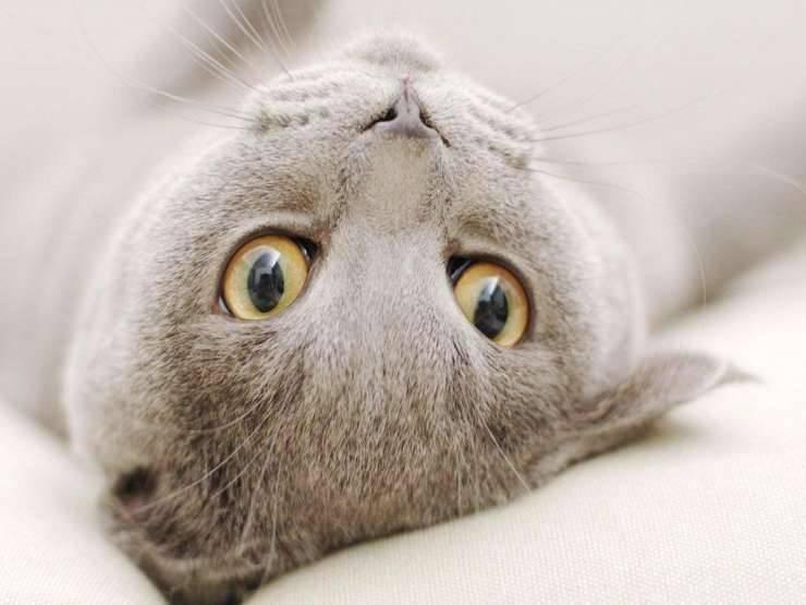 Małe kotki 7