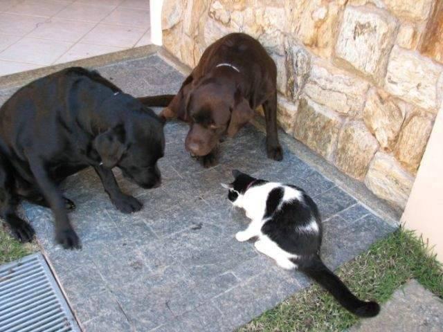 Kot i pies w jednym domu ? 16