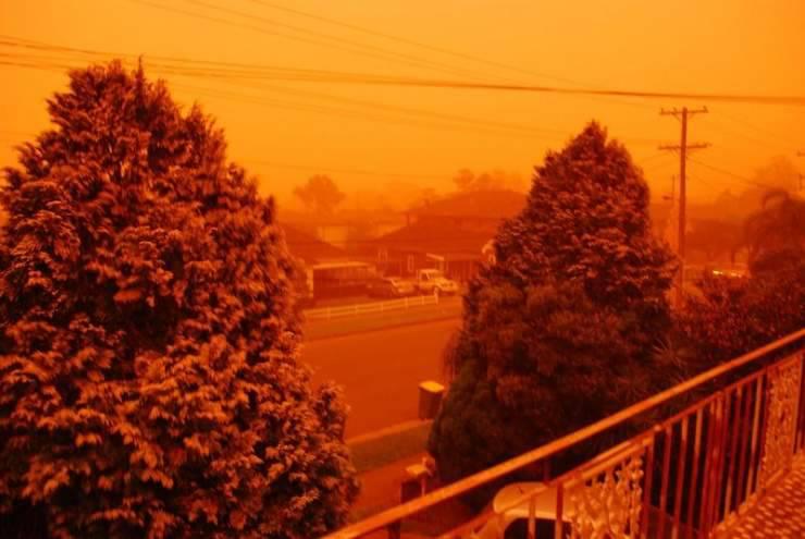 Pomarańczowe Sydney 39