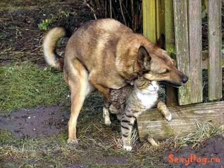 Śmieszne zdjęcia psów 43