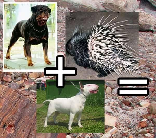 Pies vs jeżozwierz 1