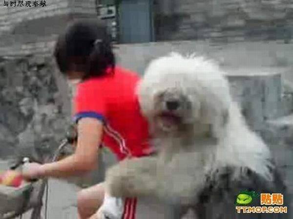 Pies przewożony na rowerze 4