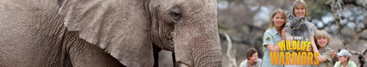 Steve Irwins Wildlife Warriors S01E24 HDTV x264-NORiTE