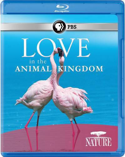 PBS - NATURE: Love in the Animal Kingdom (2013) BDRip x264-VoMiT