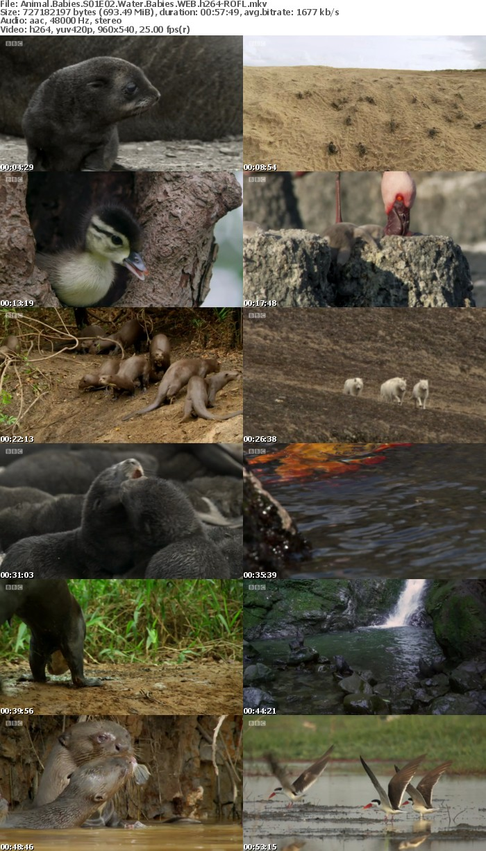 Animal Babies S01E02 Water Babies WEB h264-ROFL