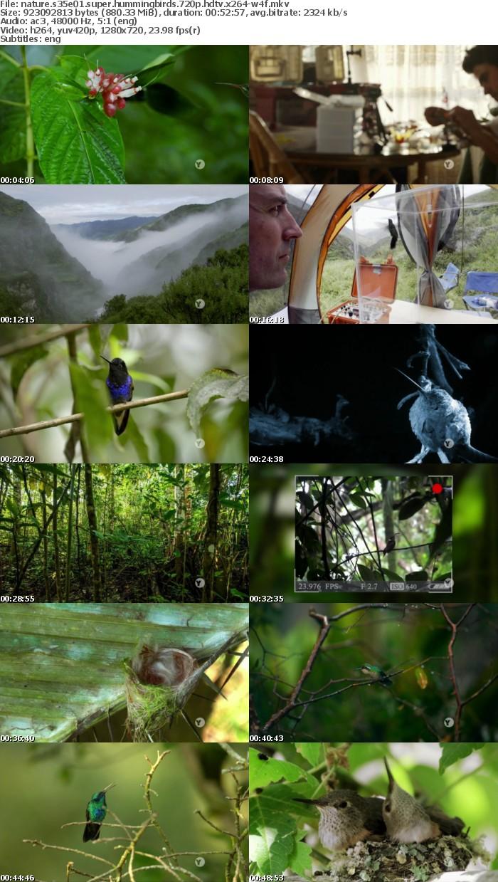 Nature S35E01 Super Hummingbirds 720p HDTV x264-W4F