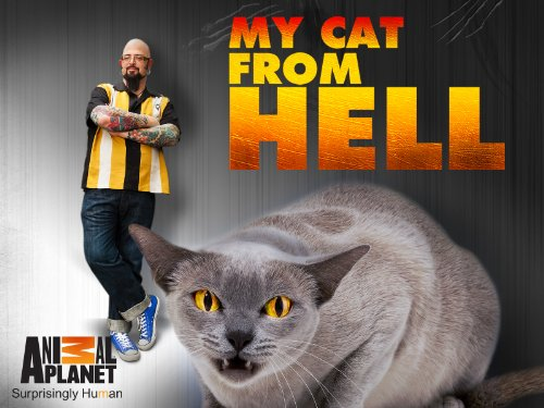 My Cat From Hell S10E09 Guilt Stricken Guardian WEB x264-CAFFEiNE