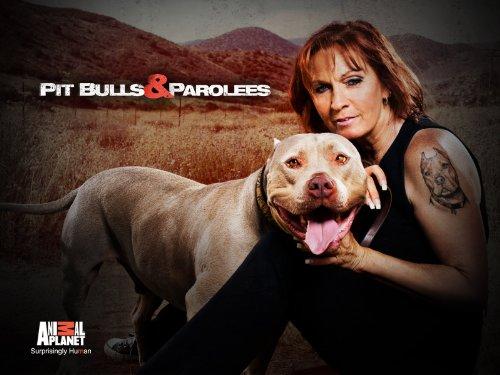 Pit Bulls and Parolees S12E05 A Clean Slate WEB x264-CAFFEiNE