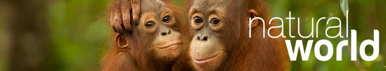 Natural World S34E16 Jungle Animal Hospital HDTV x264 UNDERBELLY