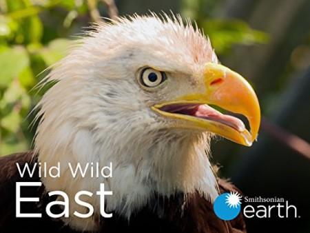 Wild Wild East S01E11 Invasion WEB h264-CAFFEiNE