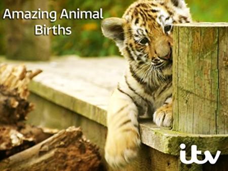 Amazing Animal Births S01E04 HDTV x264-W4F