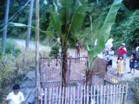 6781667a233233305e1a06160f9f0854e02a03d Pohon pisang bertandan 4 di Sayur Matinggi